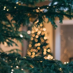 blurred-Christmas-tree.jpg