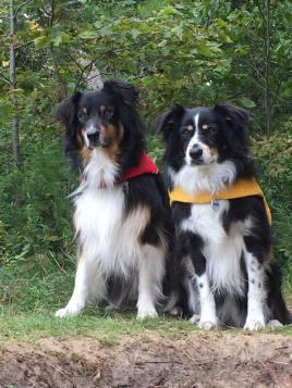 09-Super Dogs.jpg