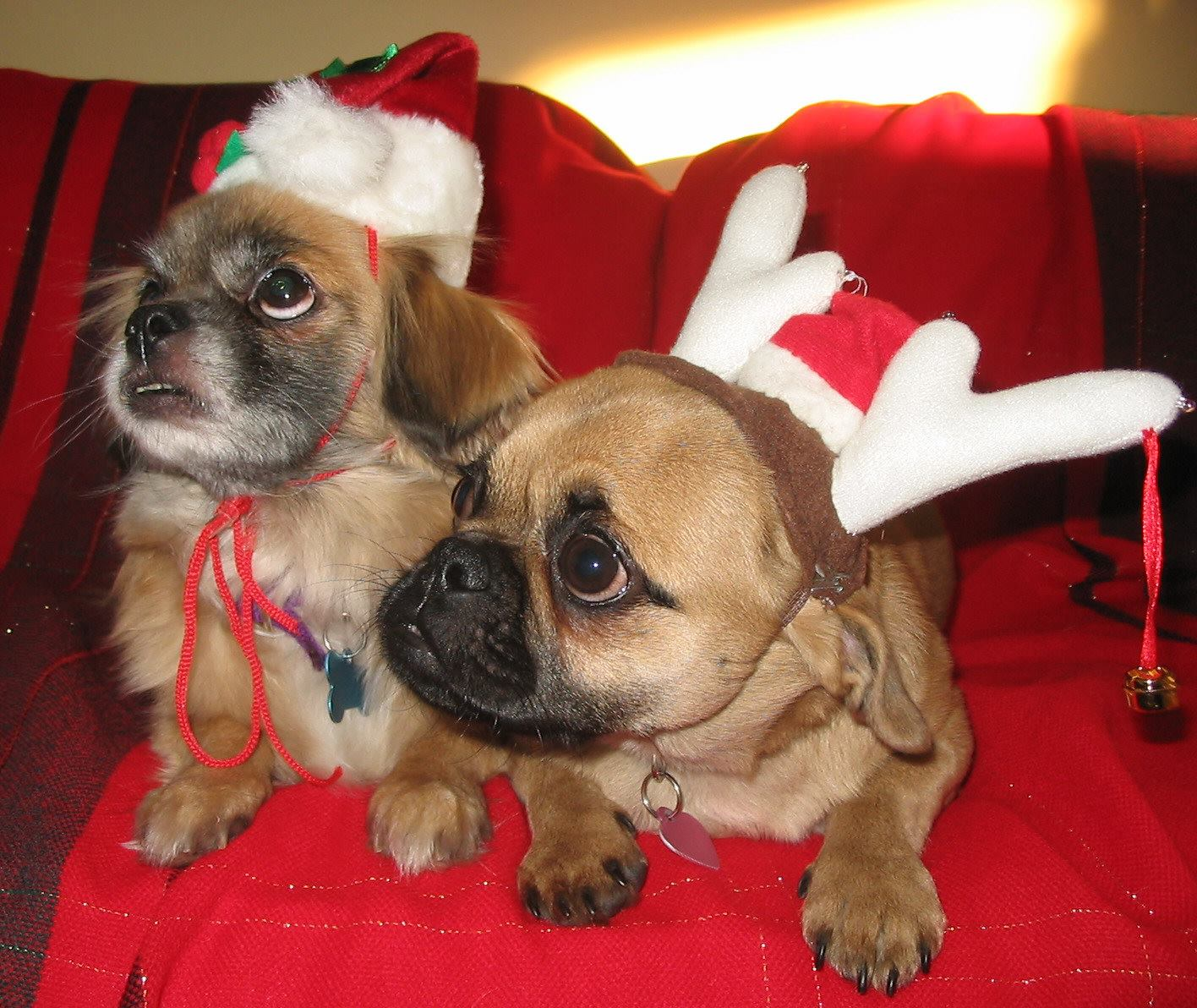 Tessa_Maddie_Waiting_For_Santa_Paws